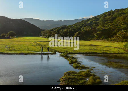 Nha Trang, Vietnam - Jan 27, 2016. Farmers standing on paddy rice field in Nha Trang, Southern Vietnam. - Stock Photo