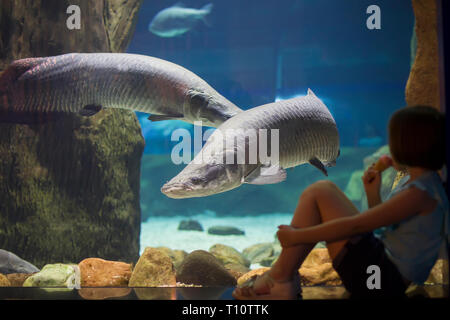 Children in the oceanarium consider fish.Little girl looking at fish tank at the aquarium.Explore the underwater world.Fish is considering a man - Stock Photo
