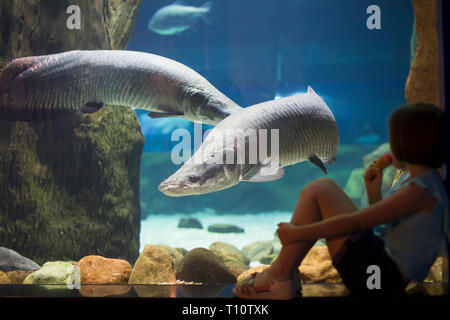 Children in the oceanarium consider fish.Little girl looking at fish tank at the aquarium.Explore the underwater world.Fish is considering a man.Under - Stock Photo