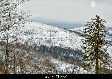 Beautiful winter landscape. Nicely snow-covered slopes in the Polish mountains. - Stock Photo