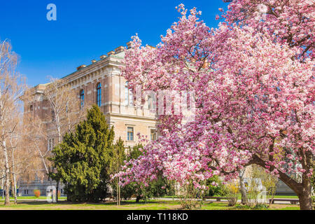 Spring in Zagreb. Academy of science and arts and magnolia blossom in spring in Zagreb, Croatia - Stock Photo