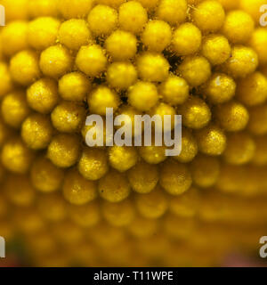macro of a yellow blossom - Stock Photo