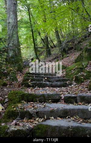 Old Stone Paths Through A Forest In Snowdonia, Wales - Stock Photo