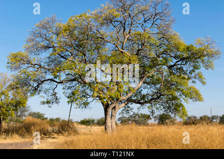 Old leafy and lonely tree - Stock Photo