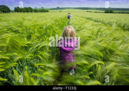 Great Britain, England, Wiltshire.  People walking through a field of ripe barley blowing in the wind. - Stock Photo
