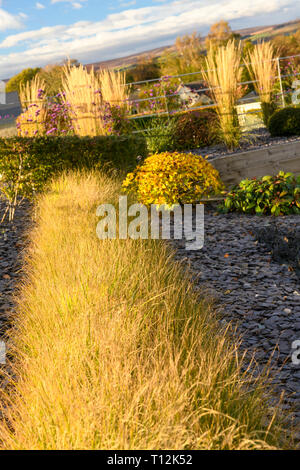 Autumn colour in beautiful private garden - stylish, contemporary design, landscaping, planting & slate chips on border (rural Yorkshire, England, UK) - Stock Photo