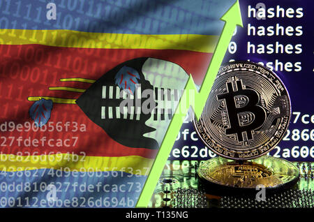 Swaziland flag and rising green arrow on bitcoin mining screen and two physical golden bitcoins. Concept of high conversion in cryptocurrency mining - Stock Photo