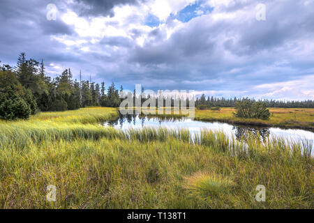 moor and lake of Hohlohsee Kaltenbronn, community Gernsbach, Northern Black Forest, Germany, raised bog surrounded by protected untouched forest - Stock Photo