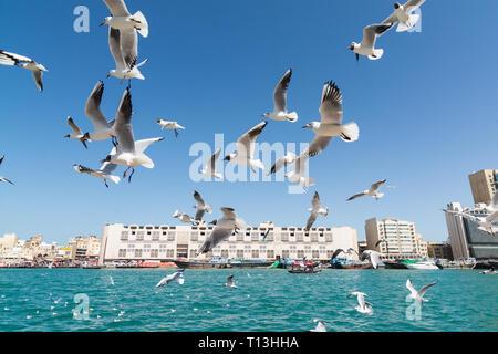 DUBAI, UNITED ARAB EMIRATES - MARCH 2019: seagulls flying along Dubai creek - Stock Photo