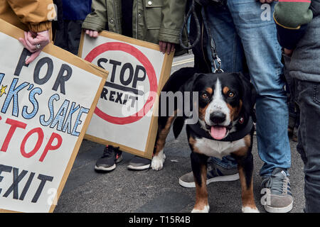 London, UK. 23rd Mar, 2019. Dog, during the protest with clidren holding signs Credit: Rokas Juozapavicius/Alamy Live News - Stock Photo