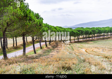 Dirt road to house on farm cypress trees lining path in Val D'Orcia countryside in Tuscany, Italy with rolling hills - Stock Photo