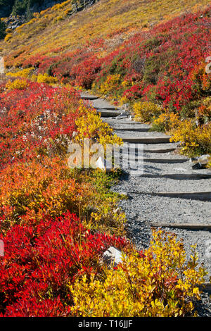 WA16017-00...WASHINGTON - A hillside covered with brilliant fall color on the Skyline Trail in Mount Rainier National Park. - Stock Photo