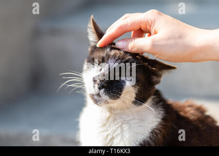 Hand petting rubbing head of stray cat companion pet happy smiling affection bonding face expression cute adorable kitty with closed eyes by steps on  - Stock Photo