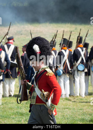 Waterloo, Belgium - June 18 2017: A British soldier with a short musket wears a bearskin during the re-enactment of the battle at Waterloo. - Stock Photo