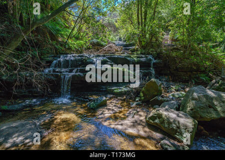 hiking the leura cascades walking track, blue mountains national park, australia - Stock Photo