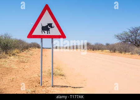 common warthog, Phacochoerus africanus, traffic sign, C2512 road, Namibia - Stock Photo