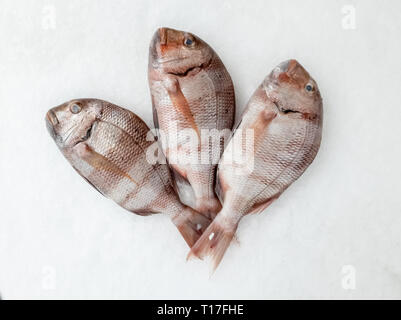 Three snapper sea fish resting on the ice, view from above. - Stock Photo