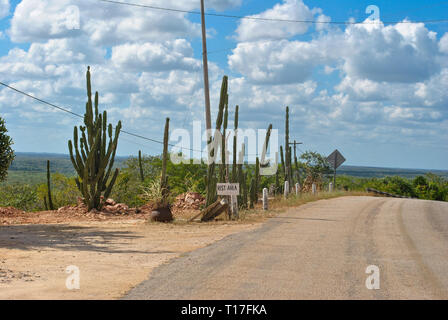 Classic panorama view of an endless straight road running through a Large Elephant Cardon cactus landscape in Baja California, Mexico - Stock Photo