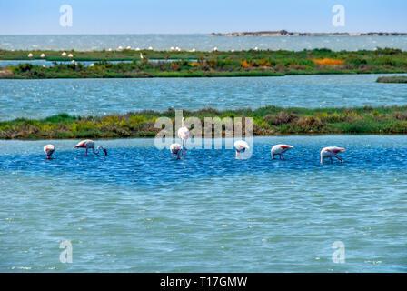 Izmir, Turkey, 26 May 2008: Flamingos and pelicans at Izmir Bird paradise - Stock Photo