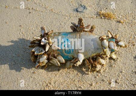 Goose barnacles  (Pedunculata) on a plastic bottle, washed up at Lamai Beach, Koh Samui, Gulf of Thailand, Thailand - Stock Photo