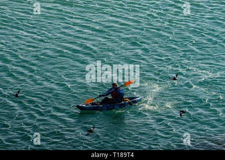 Bray Head, Ireland. 24th March, 2019 Kayaker enjoying calm, warm weather on his way from Greystones to Bray while guillemots are flying over him. Credit: Vitaliy Tuzov/Alamy Live News - Stock Photo
