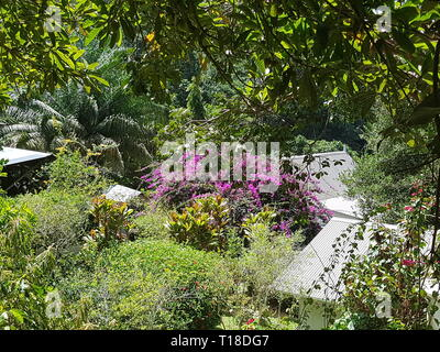 Pink flowers in the spice garden Jardin Du Roi on the Seychelles island Mahe - Stock Photo
