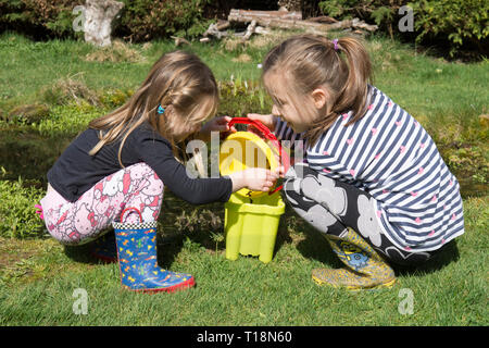 two young girls pond dipping in garden wildlife pond removing tadpoles in children's bucket, sisters, three and seven years old. UK. March. - Stock Photo