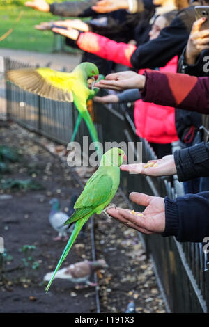 People hand feeding parakeets in St James's Park, London England United Kingdom UK - Stock Photo