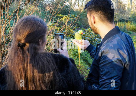 People hand feeding parakeets in St James's Park, London England United Kingdom UK - Stock Photo