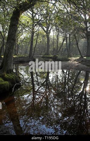 Ober Water stream at Ober Corner near Brockenhurst New Forest National Park Hampshire England - Stock Photo