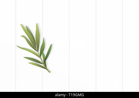 Flat lay top view elegant white composition tarragon leaf on wooden floor background. - Stock Photo