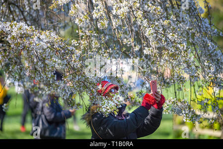 Brighton, UK. 25th Mar, 2019. Visitors enjoy the beautiful Spring sunshine and tree blossom in Pavilion Gardens today as the weather is forecast to warm up throughout Britain over the next few days Credit: Simon Dack/Alamy Live News - Stock Photo