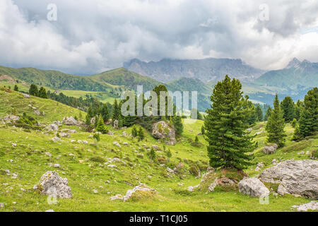 Pine trees at a meadow with boulders in the dolomites - Stock Photo