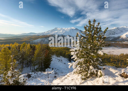 Majestic white spruces glowing by sunlight. Picturesque and gorgeous wintry scene. Alps ski resort. - Stock Photo