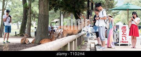 Sika deer in Nara park, Japan - Stock Photo
