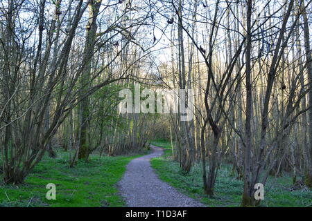 'Red Route' path in Scord's Wood below Emmett Garden at Ide Hill Kent near Toys Hill on the Greensand Ridge of the North Downs - Stock Photo