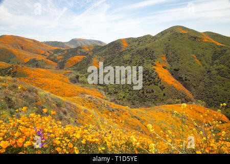California hills covered in wildflowers - Stock Photo