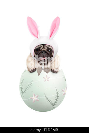 funny cute  pug puppy dog wearing bunny ears, sitting in pastel green easter egg, isolated on white background - Stock Photo