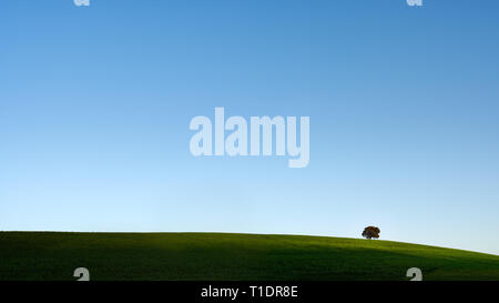 Typical Alentejo landscape (south of Portugal) with his vast spring green plain, deep blue sky and a oak tree on the horizon - Stock Photo