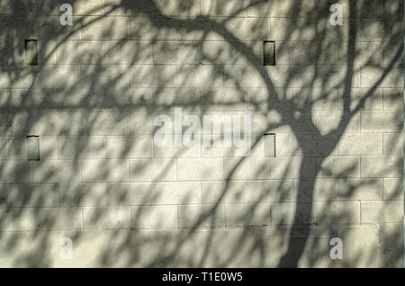 Close-up of cinder block wall with tree shadows on surface.
