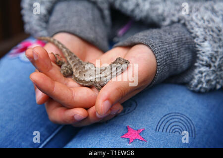 girl holding lizard in hands - Stock Photo