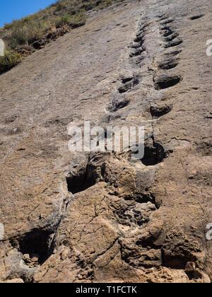 Dinosaur footprint in Toro Toro, Bolivia. Herbivore dinosaur - Stock Photo