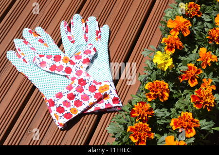 Marigold flowers with hand gloves - Stock Photo