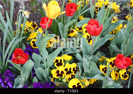 Colourful spring flowers - Stock Photo