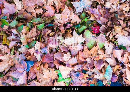 Fall Foliage Colors - Fallen Leaves along the Seine River near Paris, France - Stock Photo