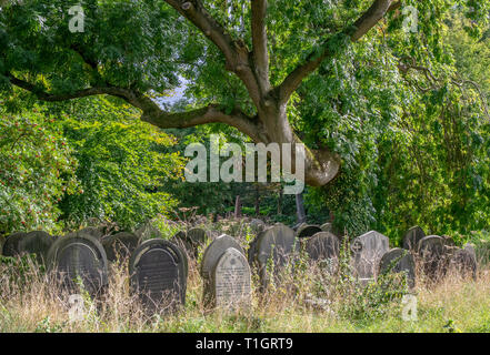 Scary tree in graveyard - Stock Photo
