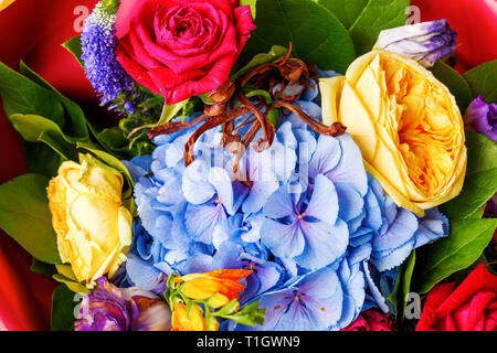 Close-up photo ofp bouquet of multi-colored roses, green leaves - Stock Photo