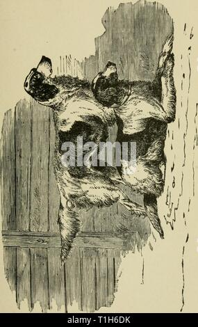 The dogs of Great Britain, The dogs of Great Britain, America, and other countries  dogsofgreatbrita01wals Year: 1919 - Stock Photo