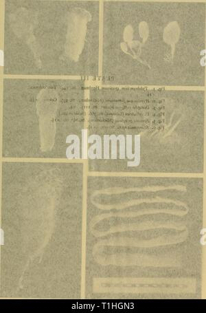 Discovery reports (1962) Discovery reports  discoveryreports30inst Year: 1962 - Stock Photo