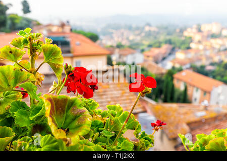Chiusi Scalo houses buildings in Italy Tuscany with town cityscape and focus on red geranium flowers in garden foreground - Stock Photo